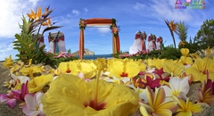 rainbow plumerias with yellow hibiscus line the aisle way