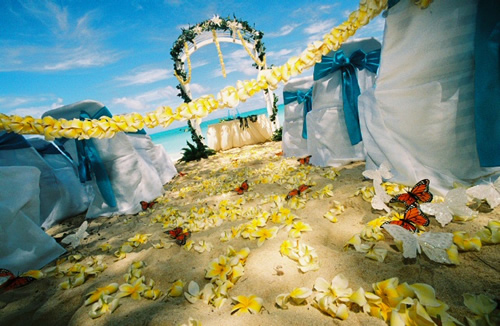 yellow plumeria with butterfly theme wedding in Hawaii