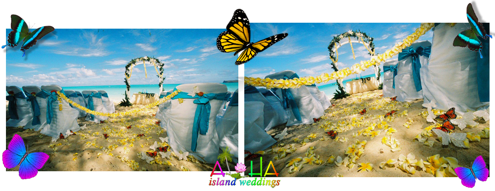 passion for dreams butterfly header