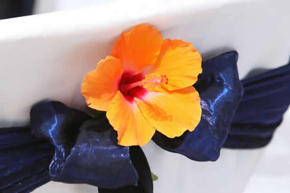orange hibiscus against a white chair cover with a midnight blue sash